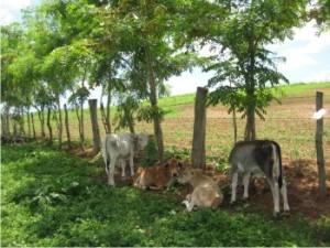 arreglos arboreos granja ecologica