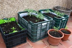 contenedores variados granja ecologica en linea